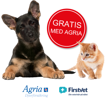 Nu erbjuder Agria gratis veterinärrådgivning via FirstVet